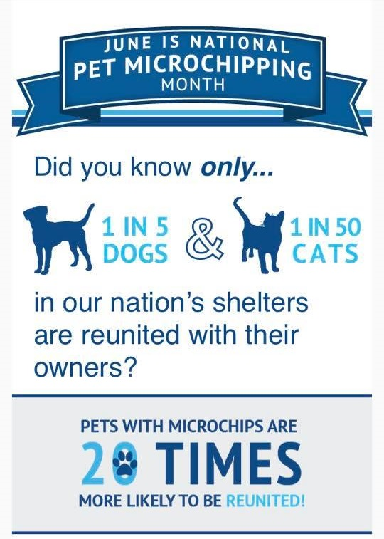 June Is National Microchipping Month Seibel Veterinary